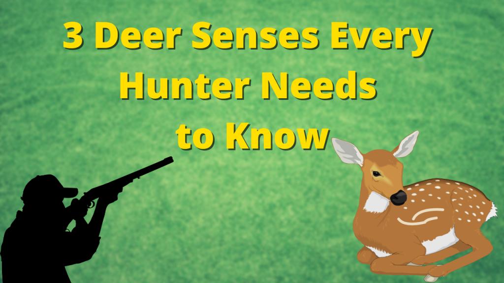 3 Deer Senses Every Hunter Needs to Know